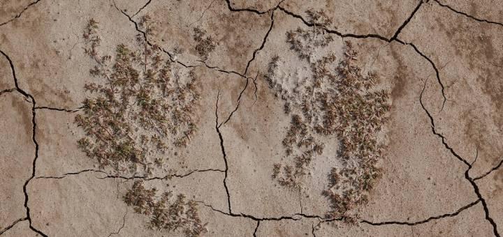 Jennifer Colten Wasteland Ecology 9522