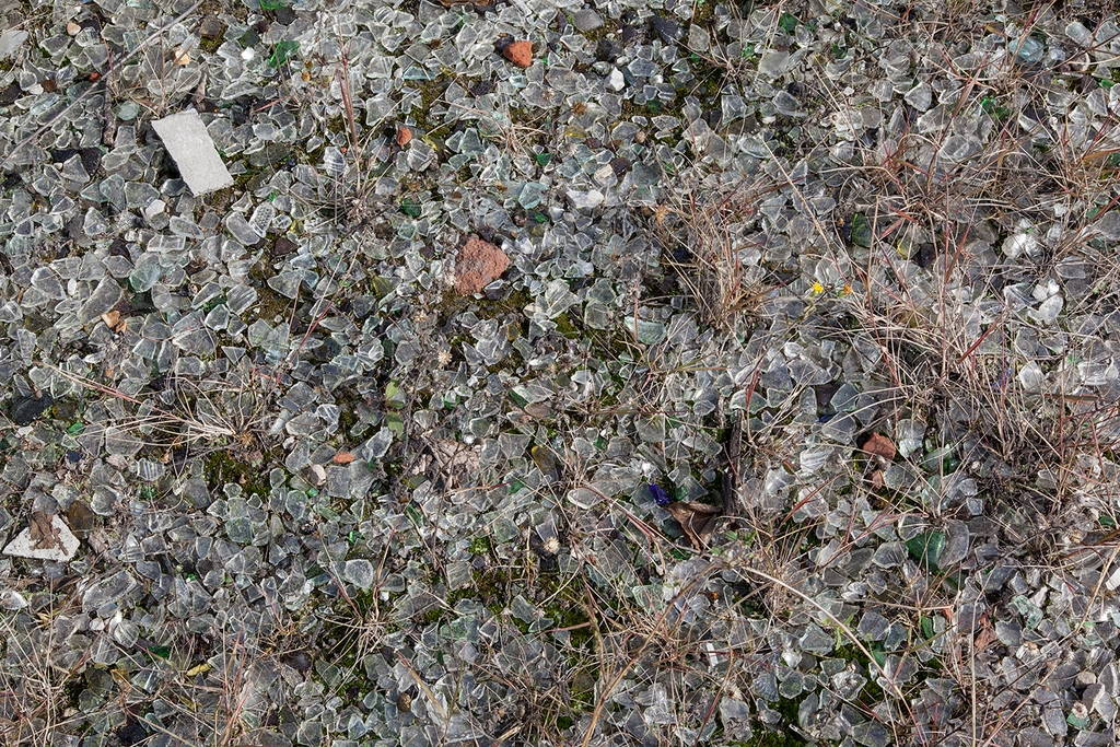 Jennifer Colten, Wasteland Ecology 9599. Click to enlarge.