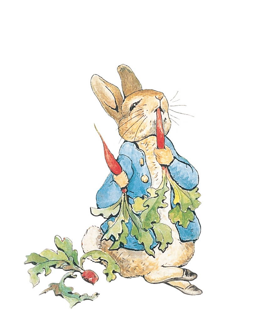 Beatrix Potter Illustrations Peter Rabbit Peter Rabbit by Beatrix