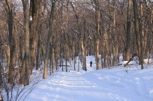 Cross-country skiing in a northern Wisconsin hardwood forest