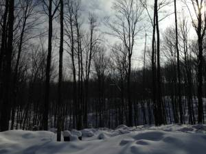 Stopping by Working Woods on a Snowy Evening