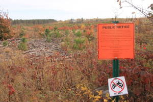 Recently harvested private land in Oneida County, Wisconsin open to public recreation
