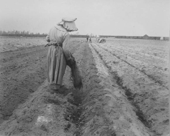 Manufacturers advertised their products as a form of crop insurance to protect farmers against the uncertainty of natural misfortunes, but there was little protection from the credit trap attached to most fertilizer purchases. A girl in South Carolina fertilizes a cotton field, 1919. Records of the Bureau of Agricultural Economics, National Archives and Records Administration, College Park, Maryland.