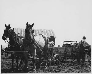 Rethinking American Agriculture: Fertilized Farms and Victory Gardens