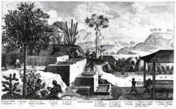 A black-and-white engraving of an indigo plantation with mountains in the background.