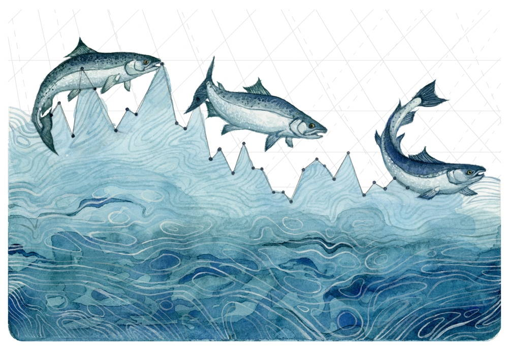 A watercolor by Jill Pelto illustrating three Coho salmon swimming above the peaks of a line graph, below which is painted blue to resemble water.