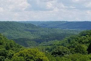 A view of leafy green trees across a valley.