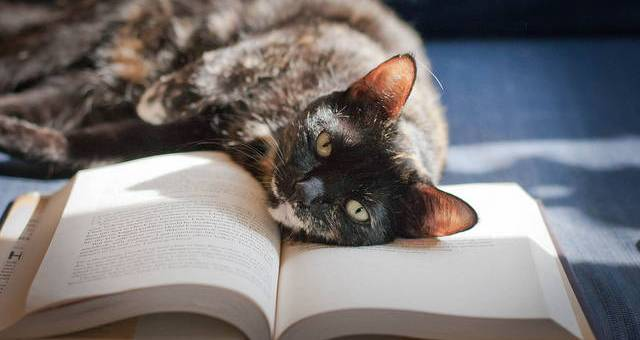 Cat lying on a book