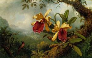 Two large yellow and red orchid blooms appear in the foreground. A small hummingbird hovers nearby. Tropical plants appear in the background.