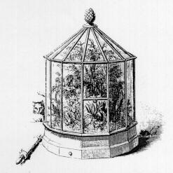 An elaborate glass case with many glass panels on the sides and glass panels that form a cone roof house a variety of plants.