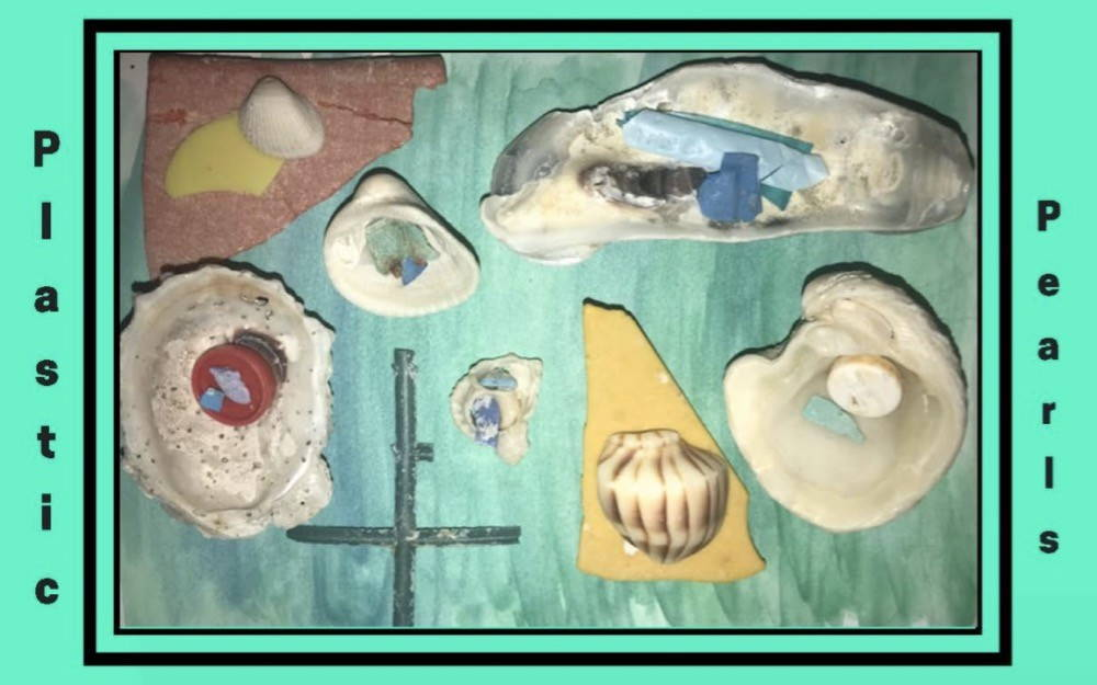 """An image from a student project of a photograph of assembled seashells and plastic detritus, arranged so that the plastic looks like pearls in the seashells or plastic and seashell look connected and one piece. A title printed on the margins of the photograph reads """"Plastic Plearls"""" in black font on a sea green background."""