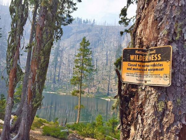 """A metal sign announcing the """"Roadless Rule"""" is nailed to a tree in the National Forest."""