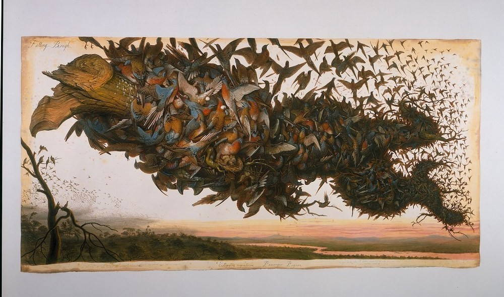 A severed tree branch fills the frame. It is covered by thousands of brown and blue passenger pigeons. They seem to be carrying the branch with them into the distance.