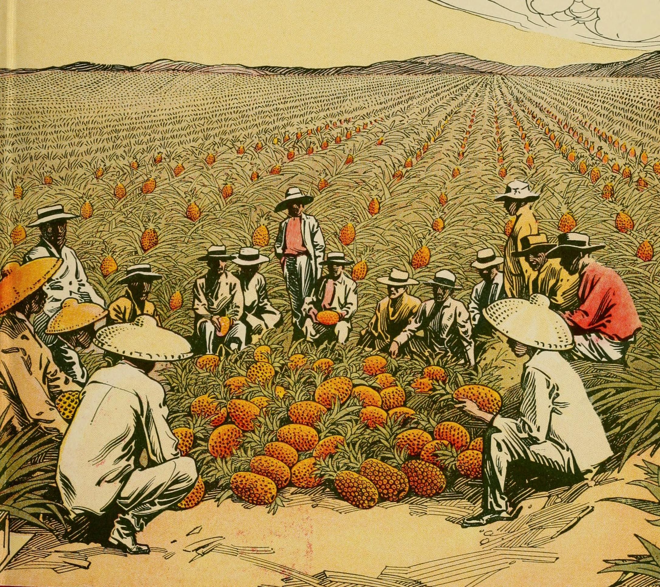 Drawing of people kneeling in pineapple plantation
