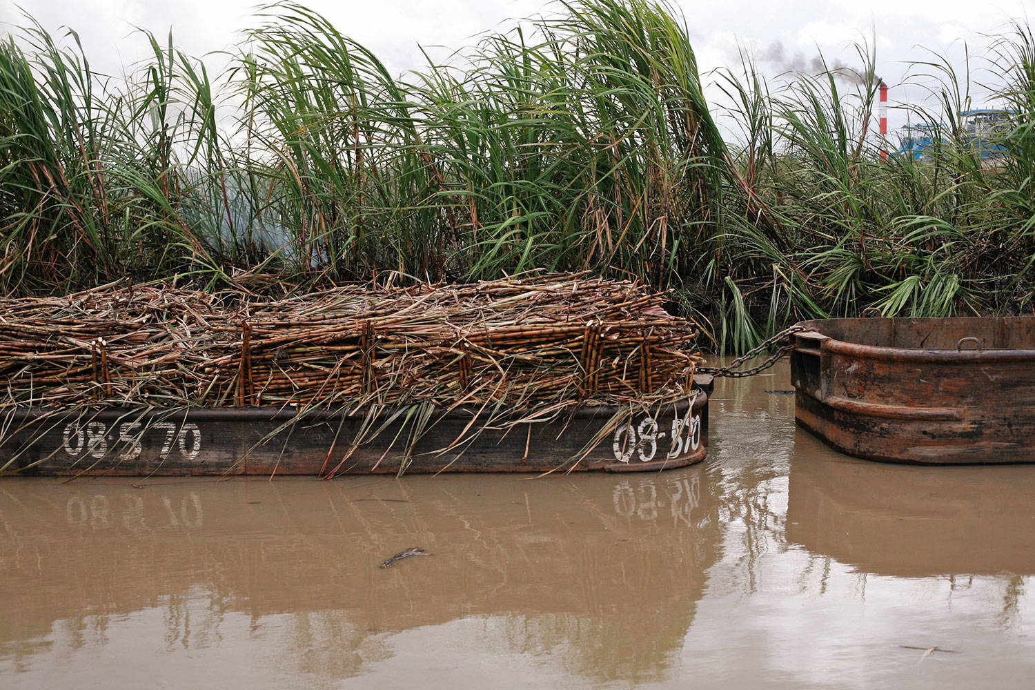 Boats filled with sugarcane on a muddy river with smokestacks visible in the background