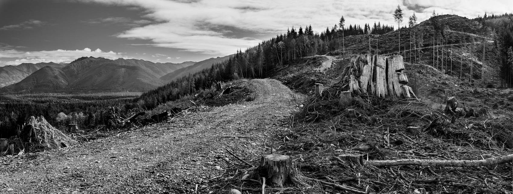 A black and white photograph of a road leading to a clearcut landscape