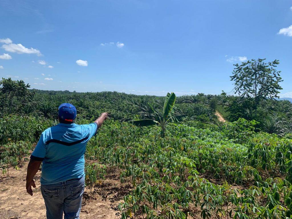 A farmer points toward a lush field of palm oil, cassava, plantain, and cocoa