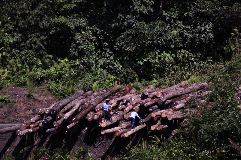 Men looking at logs among a pile
