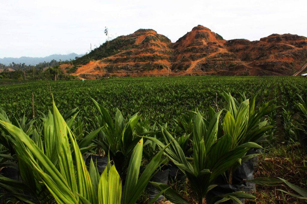 Seedlings in the foreground with hills with cleared terraces in the background, on the way to Long Loyang