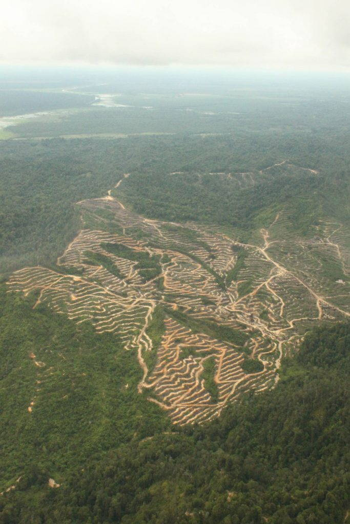 Aerial shot of cleared plantation terraces
