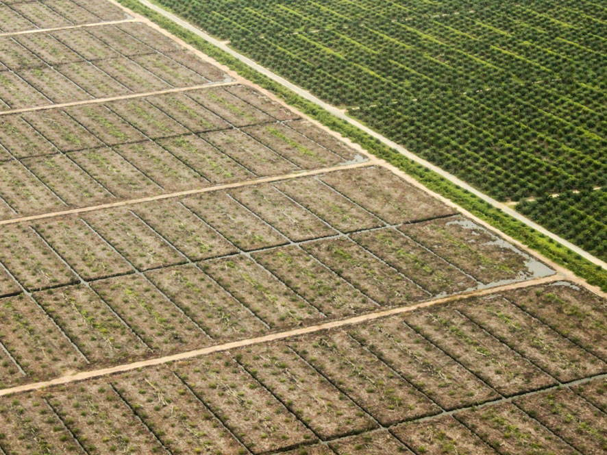 Aerial shot of a newly planted area and an area with small palms