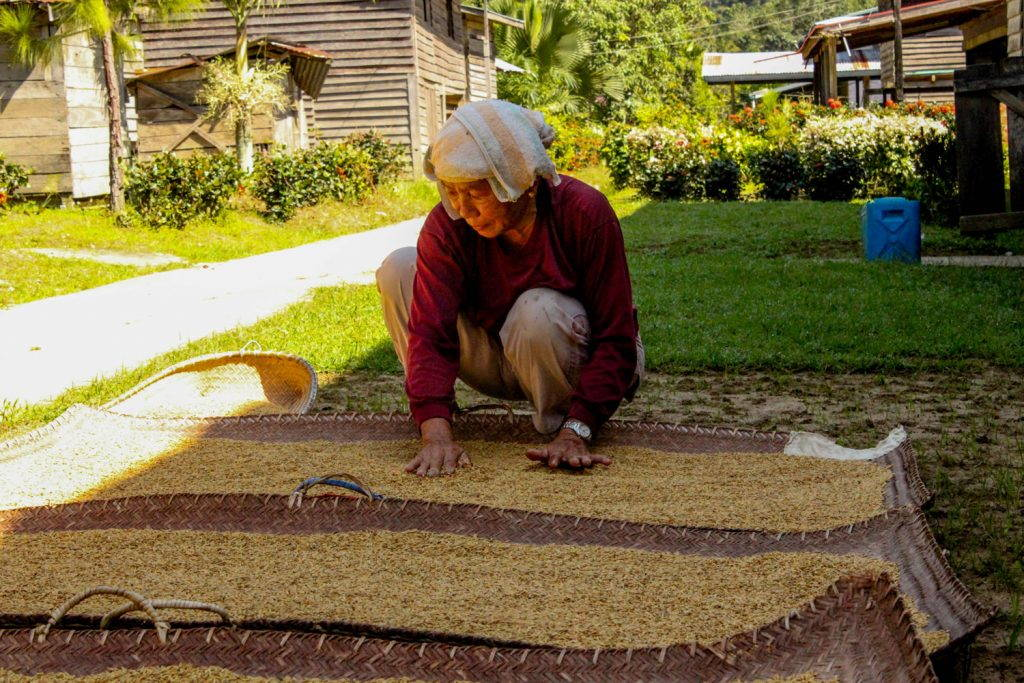Woman spreading rice out to dry on a mat