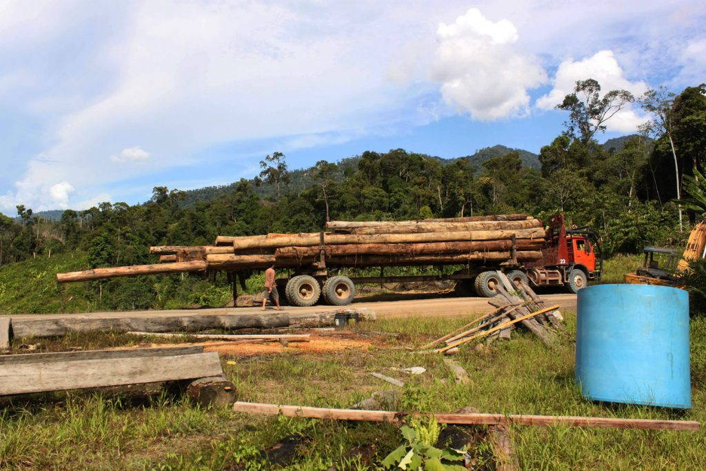 A logging truck full of logs