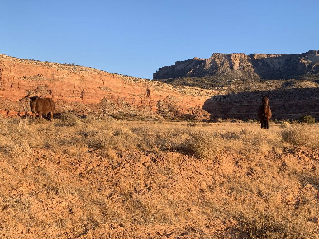 A horse stands at the edge of an open golden prairie.