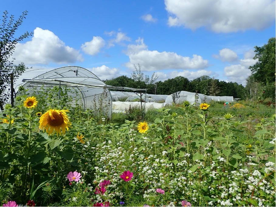 several plastic-covered high tunnels behind a bed of colorful flowers on a sunny day