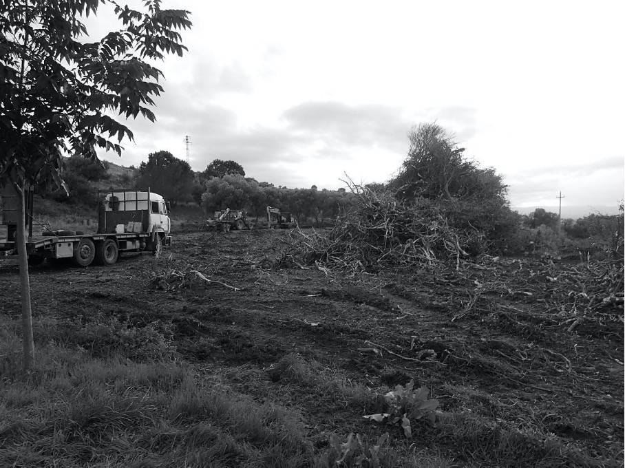 black and white photograph of a bitter orange field with bare soil and woody debris