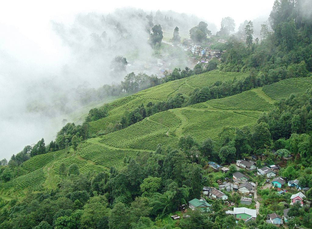 Ariel view of a small town and large green tea plantation in mist