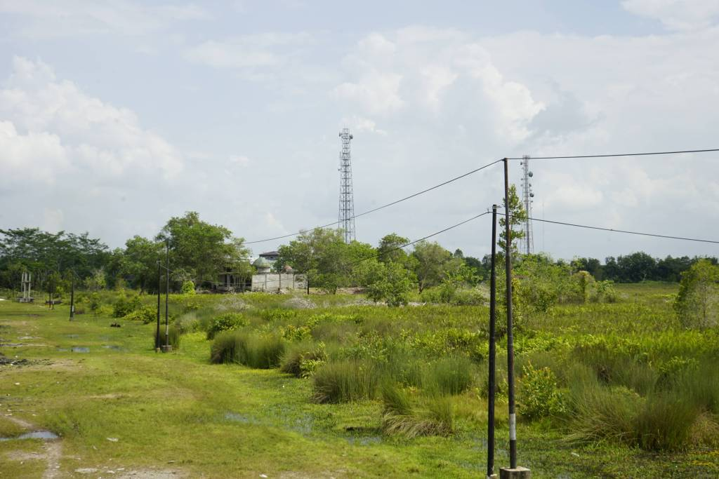 power lines in the midst of swamps and trees