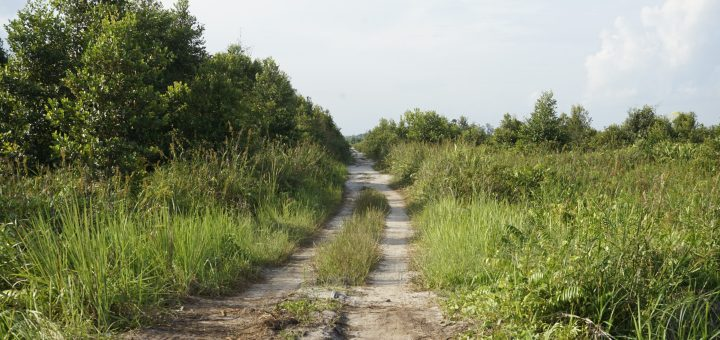 landscape of peat swamps with a path in the middle