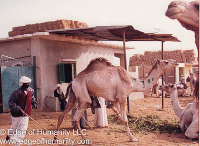 Handler - Birqash Camel Market, Egypt.