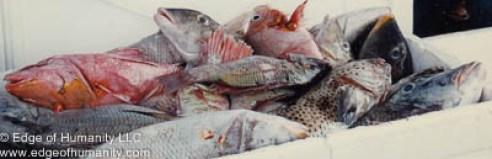 Fresh fish - Hong Kong