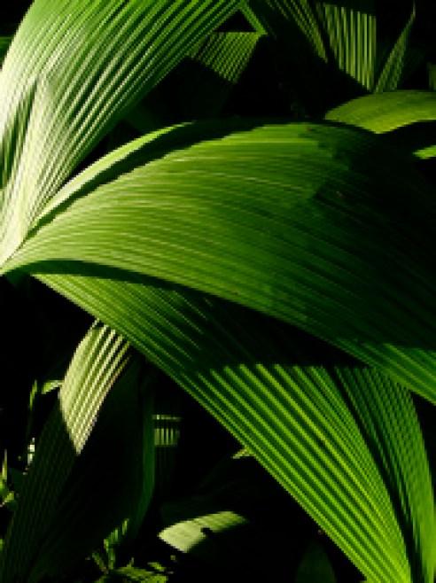 Leaf  India