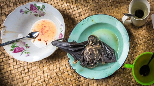 """Bat on the menu"""