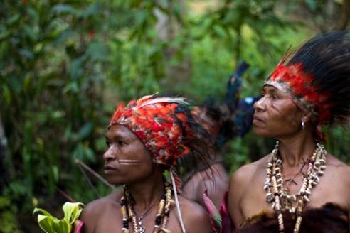These tribal headdresses are made from highly prized bird of paradise feathers, worn by both men and women in the performance of a traditional 'sing-sing' - tribal story-telling through singing and dancing. Hagareto Tribe - Goroka, Central Highlands, PNG