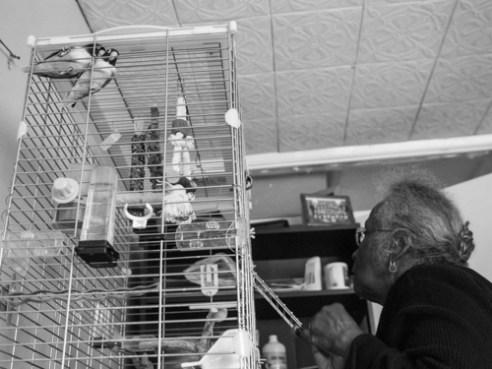 Hestelle tending to her her pet love birds.