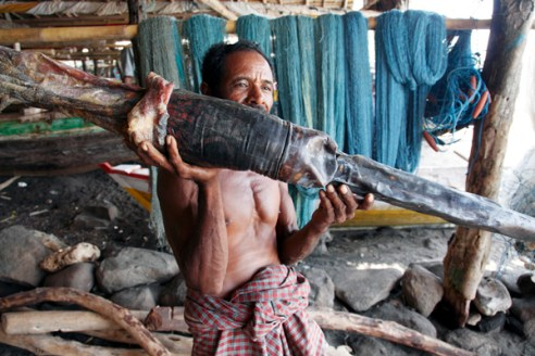 A fisherman holds a large whales penis that they hang to dry and eat for sexual prowess.