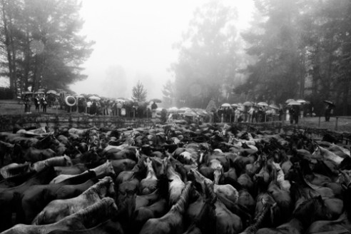"After cut their manes and branded the horses are kept in the ""curro"" till the end of the celebrations and later freed to the mountains. Amil-Moranã in Galicia, Spain."