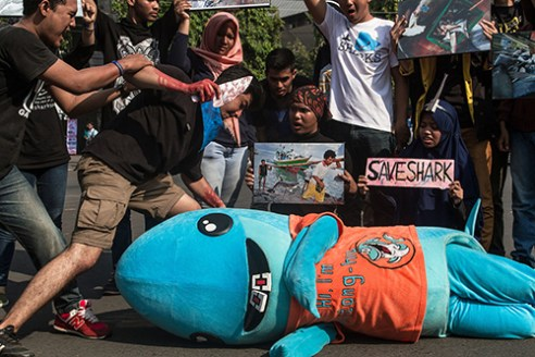 Save Sharks SEMARANG-INDONESIA, November 15th 2015. Dozens of students who are members of the associations of marine cooperating with Save Shark Indonesia and Green Peace gathered on Pahlawan Protocol street of Semarang City, Central Java, Indonesia and voiced about the protection of a shark population been threatened over-exploitation by humans.