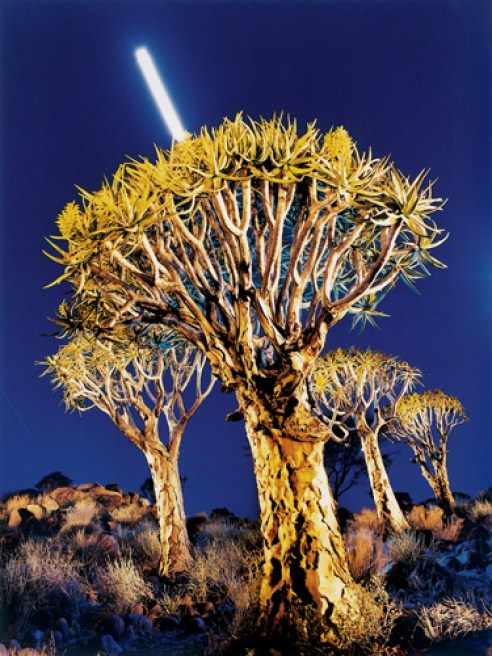 Moonrise over Quiver tree forest. Keetmanshoop. Namibia. 2000.