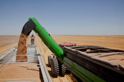 Ky Gamble unloading wheat from hopper to truck, Kiowa County