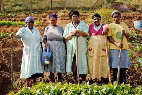 "Nkululeko Gogo Support Group, Valley of 1000 Hills, KwaNyuswa, KwaZulu-Natal The 18 members of the Nkululeko Support Group tend a vegetable garden which feeds more than 100 people who are mainly family members. The Group grows beetroot, cauliflower, turnips, spinach, chillies, pulses, cabbage and many other vegetables. Support Group leader, Emelda Khanyeza says, ""We save money by growing our own food, and sell what is left over; most people don't have their own yards so we garden here on this plot donated by one of our members. When we grow cabbages we know that for each cabbage we grow, we save R16 which is what it costs in the shops. We still need a tap and pipes, and fencing for the other part of the plot. We also dream of starting a poultry project."""