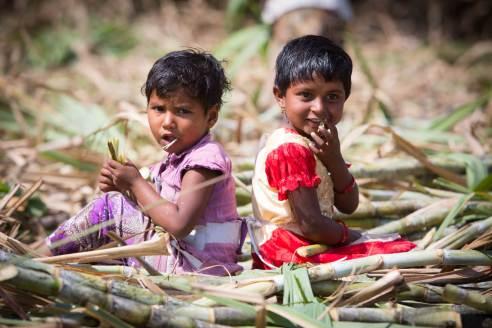 Migrant Sugar Cane Project