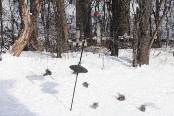 7 squirrels and a pair of cardinals. You knew the squirrels wouldn't miss out.