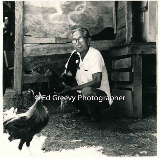 kauai-chicken-farmer-in-niumalu-nawiliwili-kauai-2666-34-7-8-73