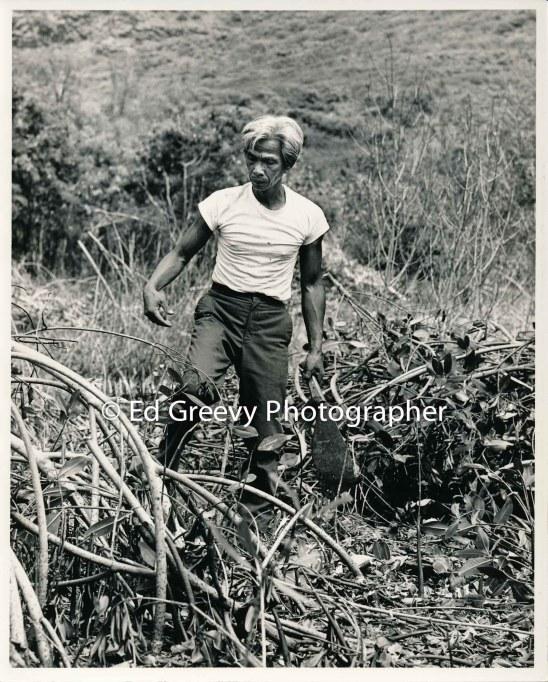 leon-miranda-niumalu-nawiliwili-kauai-resident-cuts-weeds-in-the-achi-fishpond-4071-6-10-6-24-79