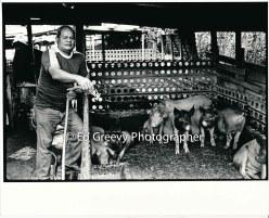 kahaluu-pig-farm-2654-6-17-4-28-73